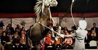 Посещение цирка, катание налошади иаттракционах внациональном конном парке «Русь». <b>Скидкадо57%</b>