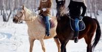 <b>Скидка до 54%.</b> Конная прогулка или обучение верховой езде вконноспортивном комплексе «Белая лошадь»