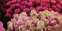 <b>Скидка до 55%.</b> Букет изголландских тюльпанов, кенийских или эквадорских роз