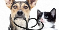 <b>Скидка до 50%.</b> Стерилизация, кастрация, первичный прием кошек исобак вветеринарной клинике «Багира»