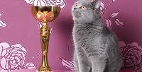 <b>Скидка до 55%.</b> Билет наМеждународную выставку кошек отклуба любителей кошек «ФелиСити» вТРК «Питерлэнд»