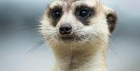 <b>Скидка до 52%.</b> Посещение зоопарка вТЦ«МореМолл» откомпании «Трогательный зоопарк»