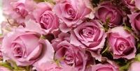 <b>Скидка до 56%.</b> Букет изкенийских роз