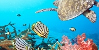 <b>Скидка до 50%.</b> Посещение океанариума