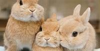 <b>Скидка до 50%.</b> Участие вэкскурсии сфотосессией скарликовыми кроликами иполучением клубной карты вантикафе Zaycafe