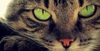 Кастрация кота или стерилизация кошки, вакцинация, стрижка в«Ветеринарной клинике». <b>Скидкадо63%</b>