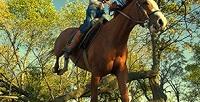 <b>Скидка до 50%.</b> Конная прогулка полесу, услуга «Принц набелом коне», 8обучающих занятий или фотосессия слошадьми отконного клуба «Наигрушке»