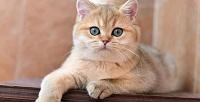 <b>Скидка до 50%.</b> Экскурсия ифотосессия скотиками откотокафе «Котики илюди»