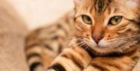 <b>Скидка до 52%.</b> 1или 2часа посещения вбудние или выходные дни котокафе «Коты-круты»