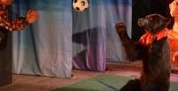 Билет наспектакль «Отмышонка домедвежонка» в«Московском театре иллюзии» (750руб. вместо 1500руб.)
