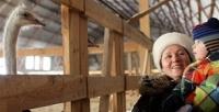<b>Скидка до 50%.</b> Экскурсия настраусиную экоферму «Русский страус»