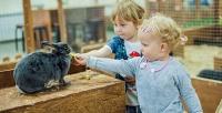 <b>Скидка до 52%.</b> Билет для взрослого или ребенка вконтактный зоопарк «Пумба-парк»
