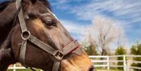 <b>Скидка до 55%.</b> Прогулка верхом налошади, верблюде вчастной конюшне «Сивка-Бурка»