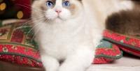 <b>Скидка до 52%.</b> Экскурсия, чай, кофе, сладости, настольные игры вкотокафе «Котя-Мотя» отсети антикафе «Котики илюди»