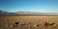 Тур вМонголию на14дней оттуроператора «Тимхайк» (60000руб. вместо 75000руб.)