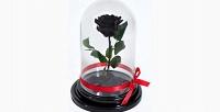 Роза вколбе любого цвета (1475руб. вместо 2950руб.)