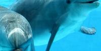 <b>Скидка до 50%.</b> 2билета нацирковое представление откомпании «Шоу дельфинов» соскидкой50%