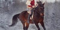 <b>Скидка до 65%.</b> 1или 2часа конной прогулки отчастной конюшни «Эквилого»