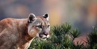 <b>Скидка до 53%.</b> Посещение вольерного зоопарка всафари-парке Live Vision