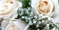 <b>Скидка до 50%.</b> Розы или хризантемы