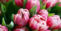 Букеты цветов вслужбе доставки Tom Fleur. <b>Скидка50%</b>