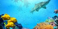 Посещение океанариума Оcean Park (750руб. вместо 1500руб.)