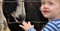 <b>Скидка до 51%.</b> Посещение для ребенка, взрослого экопарка «Зоолесье»