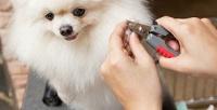 Полный комплекс услуг для собак или груминг для кошек взоопарикмахерской «Барбос». <b>Скидка61%</b>