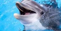 <b>Скидка до 50%.</b> Билет нашоу-программу «Музыка моря» спосещением игрового аттракциона, фоторепортажем, сувениром отЯрославского дельфинария
