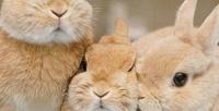 <b>Скидка до 50%.</b> Участие вэкскурсии сфотосессией скарликовыми кроликами иполучением клубной карты вбудний или выходной день вантикафе Zaycafe