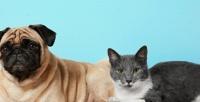 <b>Скидка до 60%.</b> Консультация ветеринара, чипирование, УЗ-чистка зубов животного, кастрация кота или стерилизация кошки всети клиник «АльфаВет»