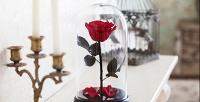 Роза вколбе соткрыткой вподарок (1792руб. вместо 2560руб.)