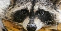 Посещение вбудние или выходные дни контактного зоопарка «Хакуна Матата» соскидкой50%