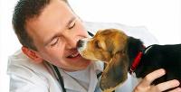 <b>Скидка до 55%.</b> Кастрация, стерилизация иуход заживотными вветеринарной клинике «Алиса»