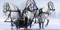 Новогодняя конная прогулка верхом или вэкипаже скомпанией «Баллада». <b>Скидка до75%</b>