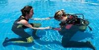 Ознакомительный курс дайвинга либо пробное погружение вдайвинг-центре TT-Divers. <b>Скидкадо67%</b>