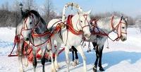 2или 3часа конной прогулки влесу либо поле в«Конном дворике вАшукино». <b>Скидкадо58%</b>