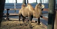Билеты для 2, 3или 4человек взоопарк «Мадагаскар» вСормовском парке. <strong>Скидкадо52%</strong>