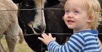 Билет для ребенка или взрослого вконтактный зоопарк «Теремок». <b>Скидка50%</b>