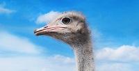 Экскурсия-квест наподмосковную ферму «Русский страус». <strong>Скидка до 52%</strong>