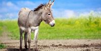 Посещение контактного зоопарка «Упитанный ослик» для взрослых идетей. <b>Скидка50%</b>