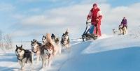Посещение центра ездовых собак хаски Arctic Village. <b>Скидкадо52%</b>