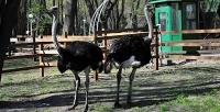 Экскурсия постраусиной ферме спосещением контактного зоопарка втуристическом комплексе «Татарский страус». <b>Скидкадо56%</b>