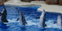 Поход вдельфинарий «Шоу Карибских Дельфинов». <b>Скидка50%</b>