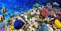 Экскурсия вокеанариум «Морской аквариум» ввыходные или будние дни. <b>Скидкадо64%</b>