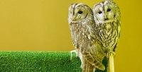 Экскурсия, фотосессия с совами и клубная карта в антикафе «Совиный дом». <b>Скидка50%</b>