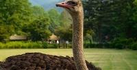 Экскурсия-квест наподмосковную ферму «Русский страус». <b>Скидкадо51%</b>
