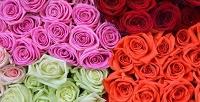 Букет до101 розы длиной до70см встудии цветов «Ирис». <b>Скидкадо55%</b>