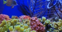 <b>Скидка до 52%.</b> Экскурсия для взрослого или ребенка в«Морском аквариуме наЧистых прудах»