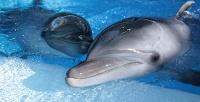 Билет вцентр океанографии иморской биологии «Дельфиния» соскидкой 50%